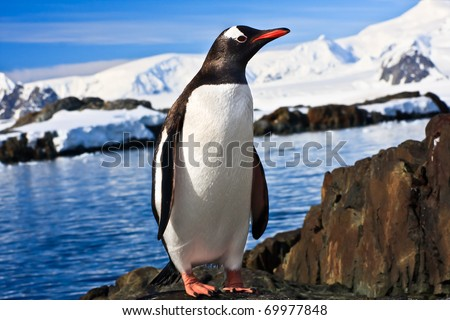 penguin on the stone coast of Antarctica, mountains in the background