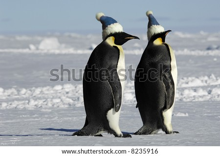 Penguin pair with caps