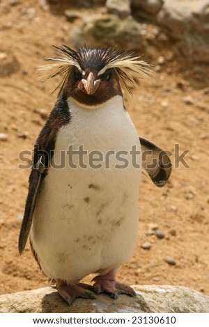 Penguin standing full portrait - stock photo