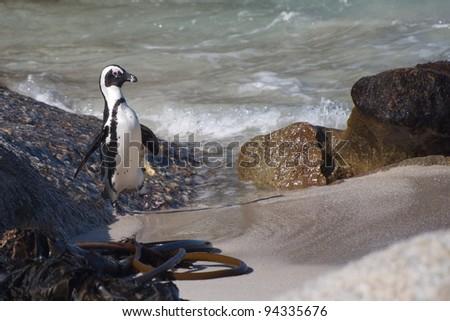 Penguin Taking a walk