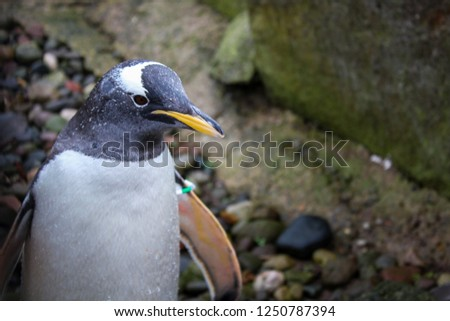 penguin zoo picture