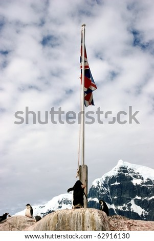 Penguins and flag in Port Lockroy, Antarctica