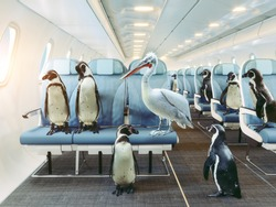 penguins and pelican  fly in the airplane cabin. Creative photocombination concept