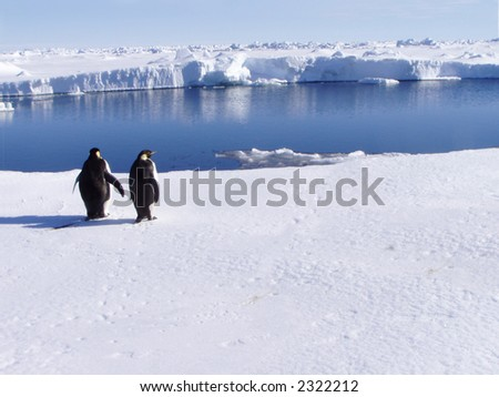 Penguins at the ocean