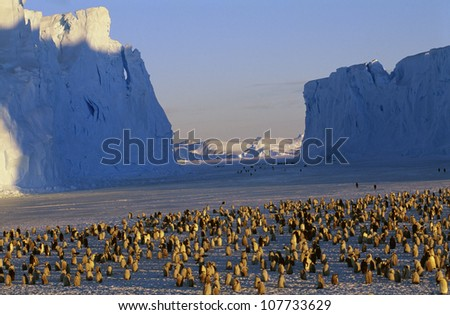 Penguins by iceberg