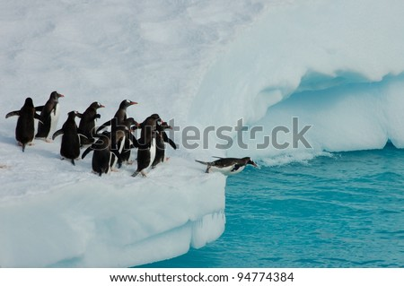 Penguins diving off iceberg