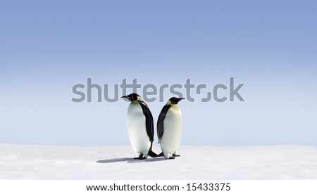 Penguins don't know where to go - stock photo
