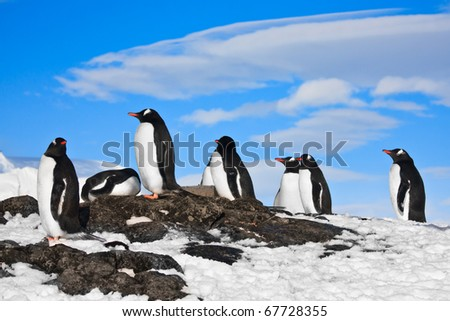 penguins dreaming sitting on a rock in Antarctica