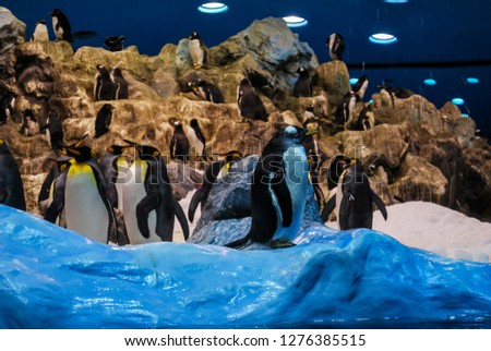 penguins in antarctica, beautiful photo digital picture
