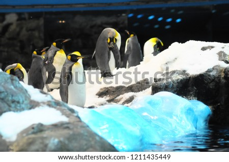 penguins in antarctica, digital photo picture as a background
