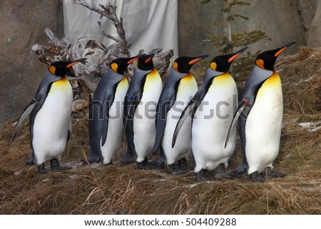 Penguins lining up