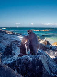 Penguins Love Romantic South Africa Africa