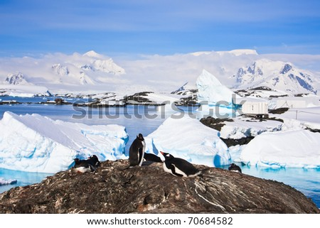 penguins on a stony coast in Antarctica - stock photo