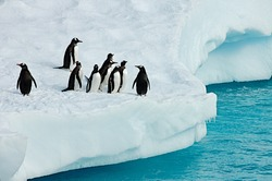 Penguins on iceberg thinking about getting back in the water