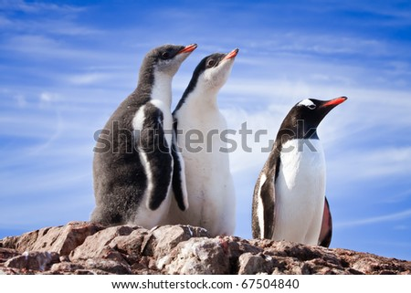 penguins resting on the stony coast of Antarctica - stock photo