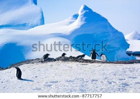 penguins resting on the stony coast of Antarctica