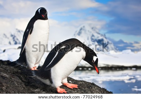 penguins standing, mountains in the background