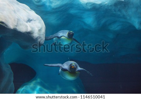 Penguins swimming underwater