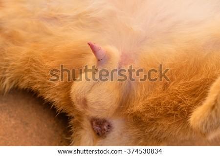 Picture Of Cat Penis 11