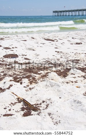 PENSACOLA BEACH - JUNE 23: An oil-stained bird feather lies near large patches of oil on June 23, 2010 in Pensacola Beach, FL