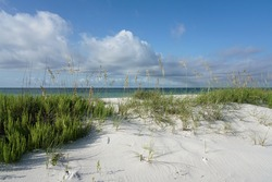 Pensacola Florida Beach morning, crisp details, ripe sea oats, pristine landscape at Gulf Islands National Seashore.