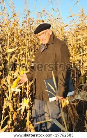 pensive grandfather in maize field