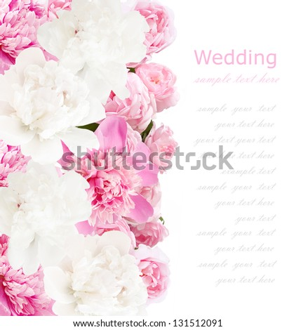Peonies background. Peonies and roses bunch isolated on white with sample text