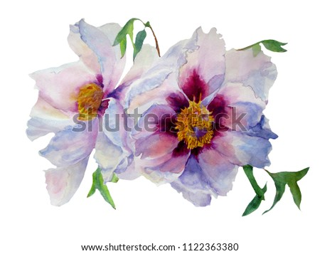 Peonies Flowers With Yellow Center And Purple And White Petals Ez