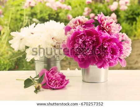 peony flowers Zdjęcia stock ©