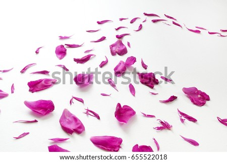 Peony petals isolated on white background. Romantic design. #655522018