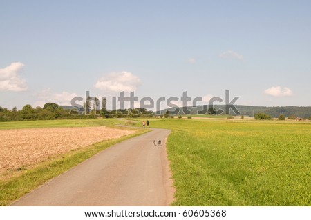 People and dogs run on the road between the fields .