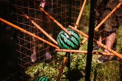 people are holding with cticks ball like a watermelon in a cage close up