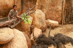 People feed ostriches in ZOO park, Bali, Indonesia. A Young Asian man is Feeding a Ostrich. Visitor feed the ostriches with leaves