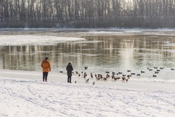 People feeding many wild ducks on winter cold icy river on frosty sunny day. Woman and man throwing food to happy hungry birds in sunny scenic wintry landscape
