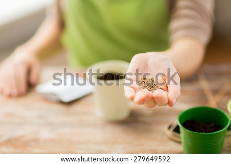people, gardening, seeding and profession concept - close up of woman hand holding and showing seeds #279649592