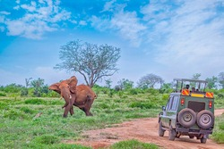 People on safari watch an elephant from off-road car in Tsavo East, Kenya. It is a wildlife photo from Africa. It's a beautiful sunny day.