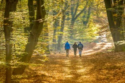 People strolling on Walkway in autumn forest with colorfull fall foliage in hazy conditions. Veluwe, Gelderland Province, the Netherlands.