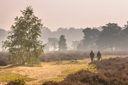 People walking along path through heathland on a morning in october under autumn light. Otterlo, Hoge Veluwe, the Netherlands