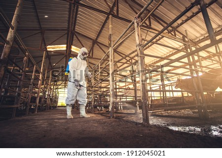 People wearing personal protective equipment or PPE with spraying disinfectant for protection pandemic of disease in cattle farm. Agriculture cattle farm industry.
