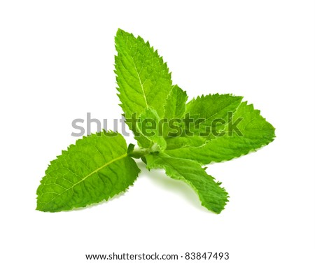 Pepper mint leaves, isolated on white background