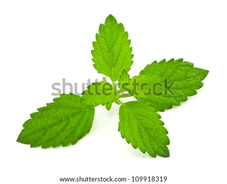 Pepper mint leaves, on white background
