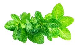 Peppermint Isolated. Fresh mint leaves ia a row on white background, top view. Close up