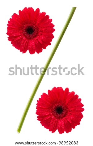 percent sign from gerbera daisy flowers isolated on white