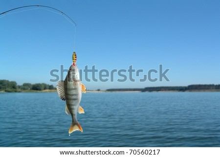 perch on fishing-rod on lake background