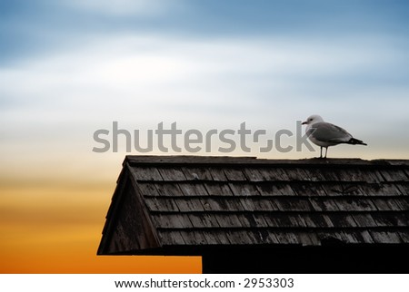 Perched Seagull, Against Sunset