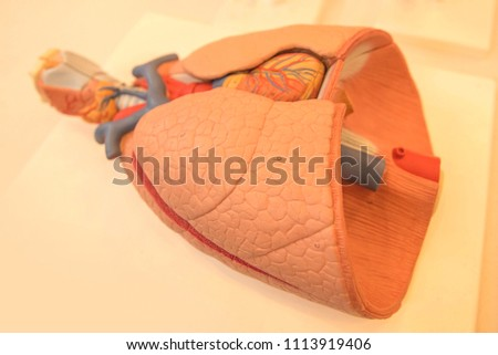 Free Photos Internal Organ Avopix