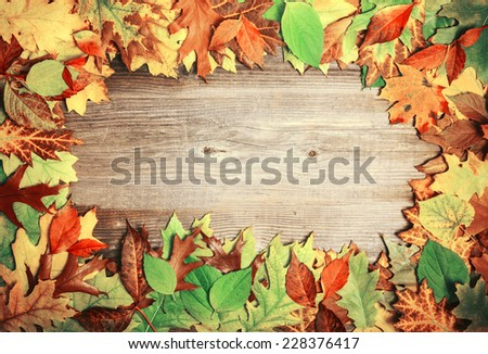 Perfect Autumn background made of multicolored autumnal leaves making frame
