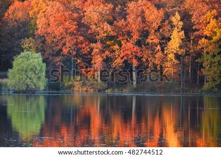 Perfect autumn tree reflections in Michigan at Kent lake
