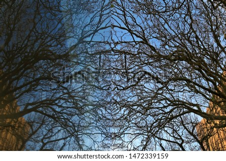 Perfect balance of reflection of trees and branches on the glass wall