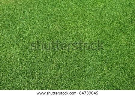 Perfect Green lawn